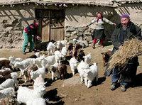 فلاحون من الأقلية الويغورية، الصورة: د.ب.ا