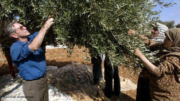 المؤلف الإسرائيلي عاموس عوز يشارك نساء فلسطينيات في قطف الزيتون بتاريخ 30 أكتوبر 2002 في قرية عقربة بالضفة الغربية. د ب أ