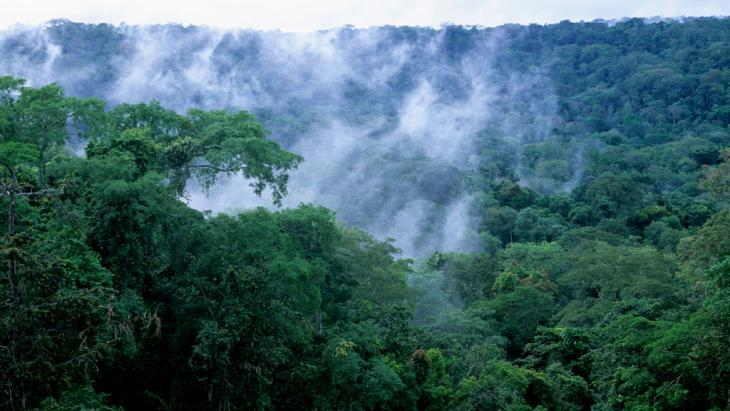 غابة في حوض الكونغو الغربي. Foto: picture alliance/ WILDLIFE