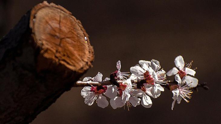 زهور تنمو من جذع إحدى الأشجار. Foto: FARS