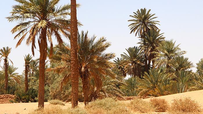 واحة في الصحراء العربية. photo: DW