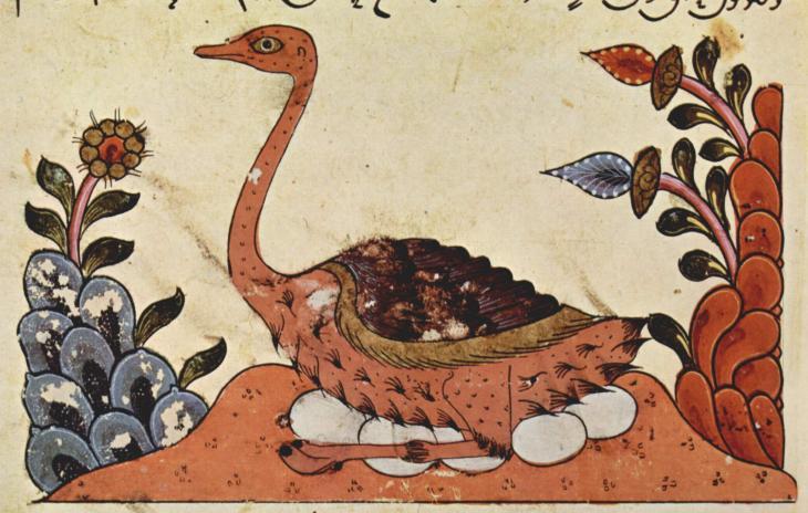 """صورة لنعامة من كتاب """"الحيوان"""" للجاحظ. رسم سوري من العام 1335. Quelle: Wikipedia"""
