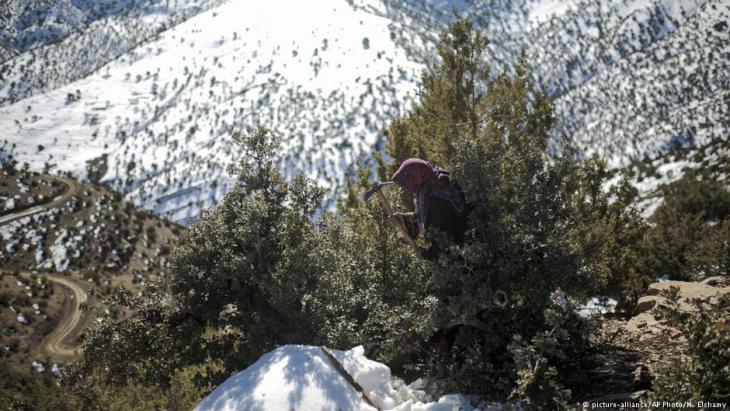فاطمة، عمرها 39 عاما، تقطع الخشب لأخذه إلى المنزل في تيغانمين، قرية بربرية أمازيغية في وسط جبال الأطلس، بالقرب من منطقة أزيلال، وسط المغرب، بتاريخ 14 / 02 / 2018. (photo: AP Photo/Mosaʹab Elshamy)