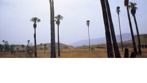 """مشروع """"حديقة سلام نهر الأردن""""، الصورة كلاوديا منده"""