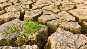 صورة تعبيرية عن تغير المناخ. جفاف وأرض متشققة وقليل من العشب. Quelle: Colourbox