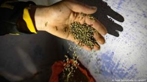أمل في أرباح قانونية - مزارع مغربي يعبِّئ كيس بذور القنب.  (Foto: Fadel Senna/Getty Images/AFP.)
